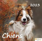 Calendrier Chiens
